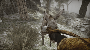 me punching a donkey and other animals in the face