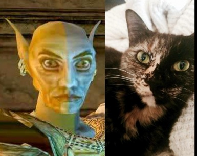 Vivec Looks Like My Cat
