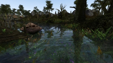 Beautiful Swamp