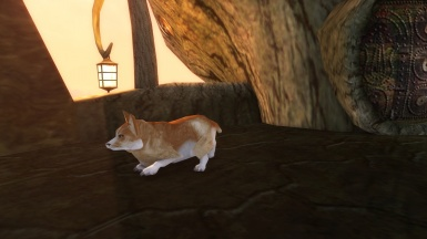 Corgi in Morrowind