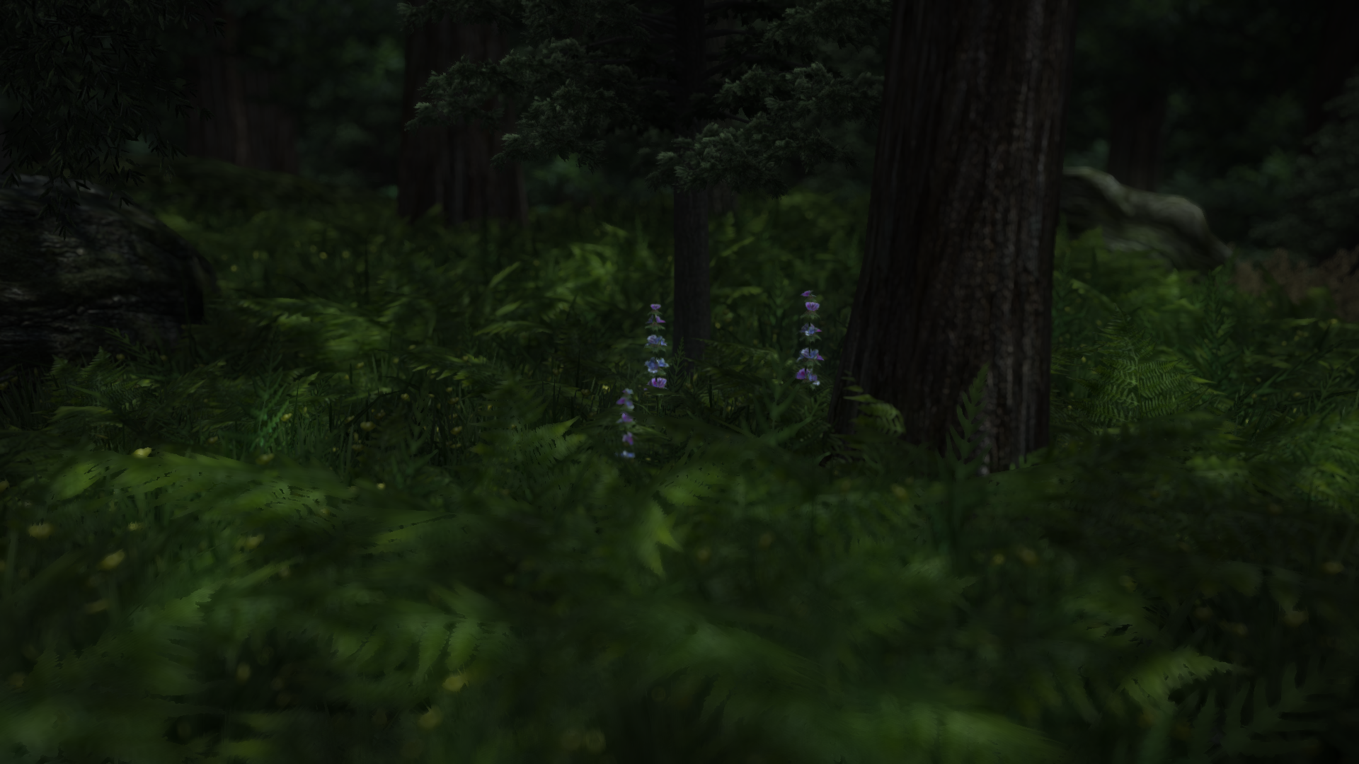 In the heart of the wood