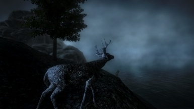 Lonely Deer