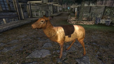 Riding a golden Elk in Oblivion is indeed possible