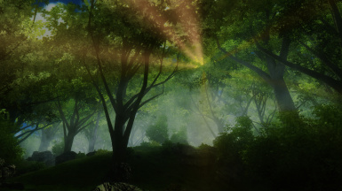 Another random forest image