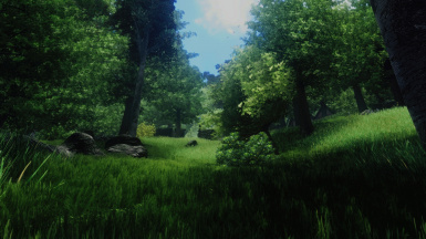 Forest again