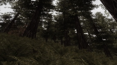 Forest -Like real