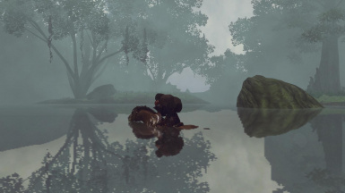 Swimming in the mist