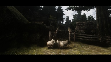 Cat's life - or sheep's