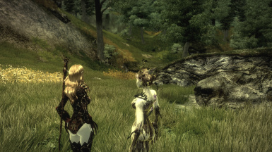 Companion of the Forest