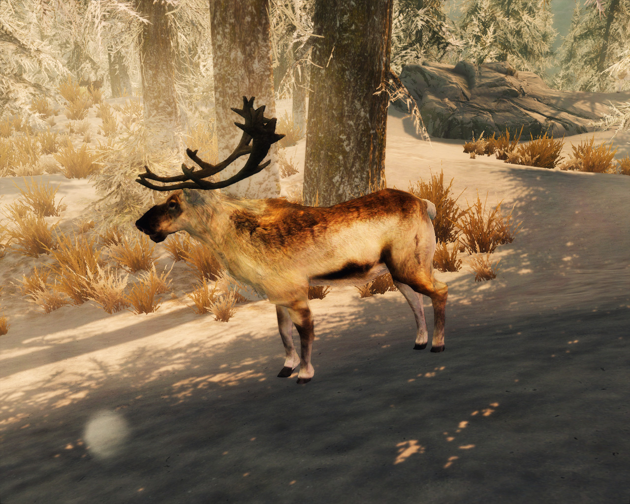 Animallica Preview -  Caribou