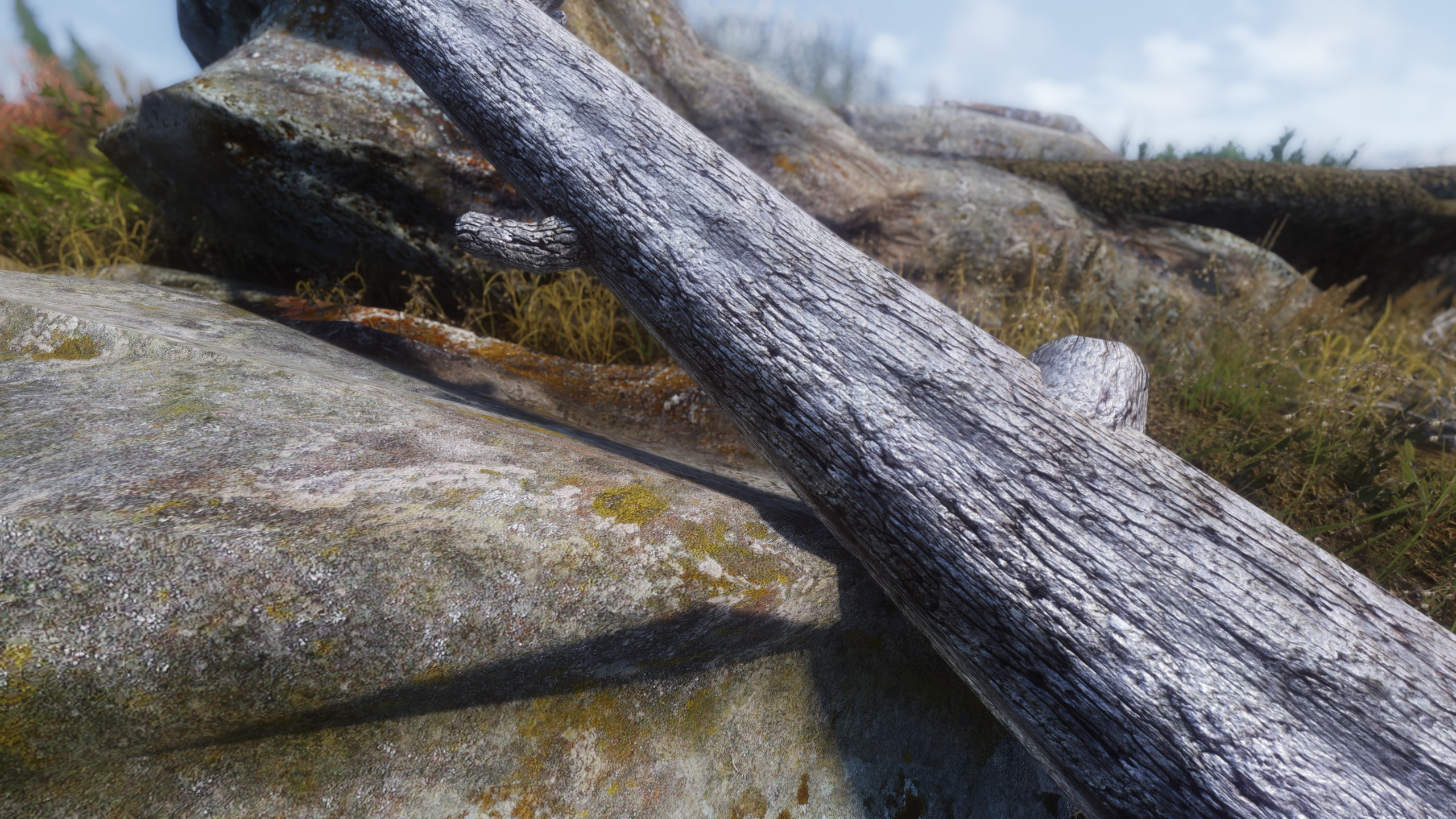 4K rock and tree