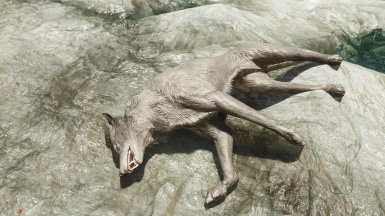 A Dead Wolf