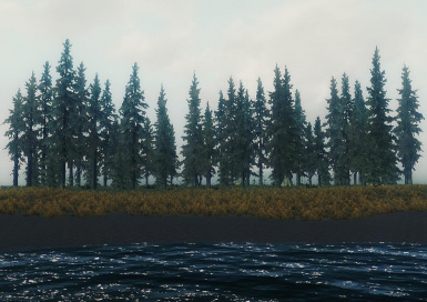 forest shore