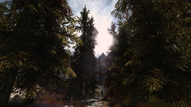 The Forest of Kynesheim