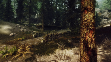A real forest or just Skyrim