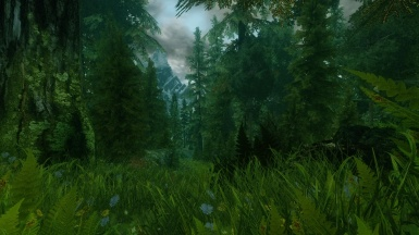 A Real Skyrim Forest
