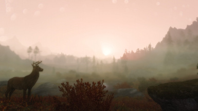 Admiring the beauty at a foggy sunset