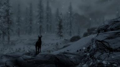 a deer in the woods