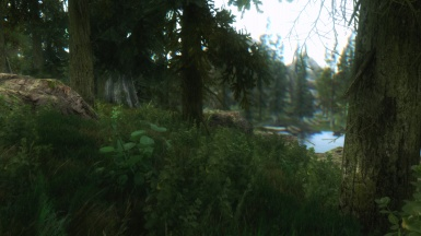 forest 5