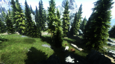 Forest 3