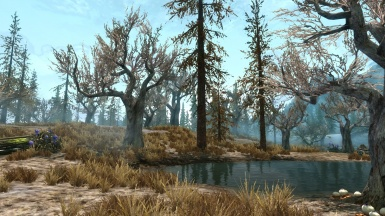 The morning in the swamps