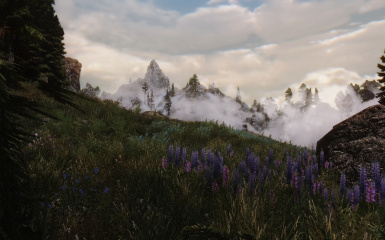High Mountain Meadow In The Reach