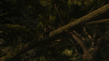 Forest - Moonpath to Elsweyr
