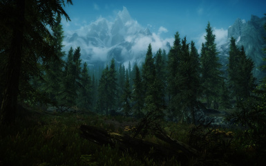 Forests of Falkreath