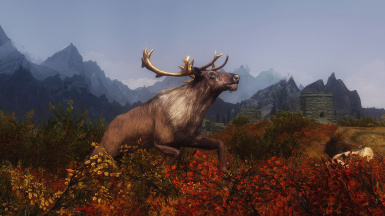 The Wilds of Skyrim