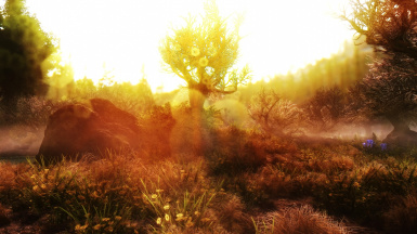 Swamp in Amber