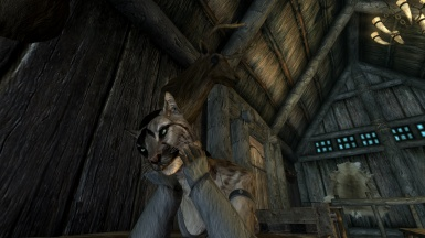 Khajiit thief