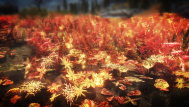 Flowers of Fall