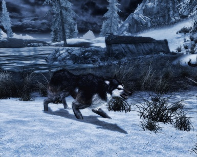 Animallica Preview -  Timber Wolf
