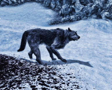Animallica Preview -  Grey Wolf
