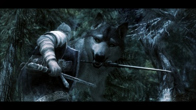 Sif the great grey wolf