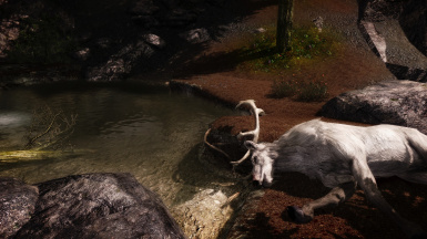 White stag hunted down