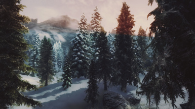 Snowy forest sunset
