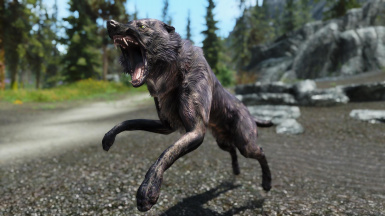 A Wolf Attacks Me