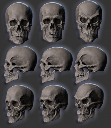 Various skulls used throughout vvardenfell