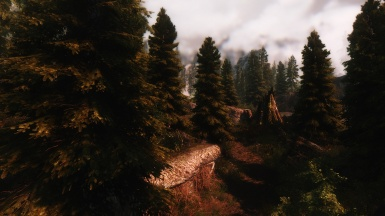 ENB Forest