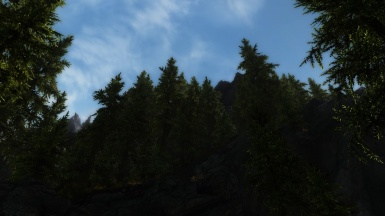 The Mountain Pines