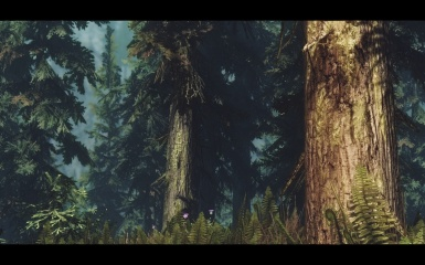 The Endless Forest