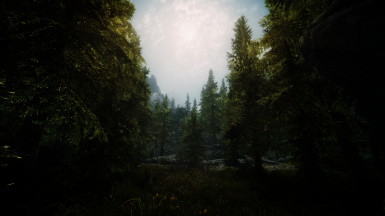Falkreath Forest