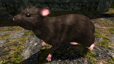 Our New Pet Rat- Pic 2