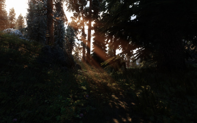 Rays through the forest