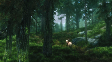 Ride in the forest 1