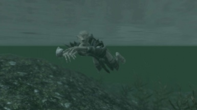 A Falmer learning to swim