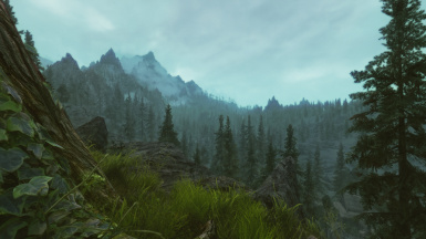 Lush forest view