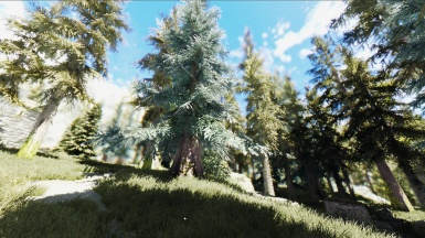 Forest with SFO TK ENB and unbielivable grass