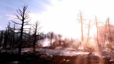 Early morning in the wilderness